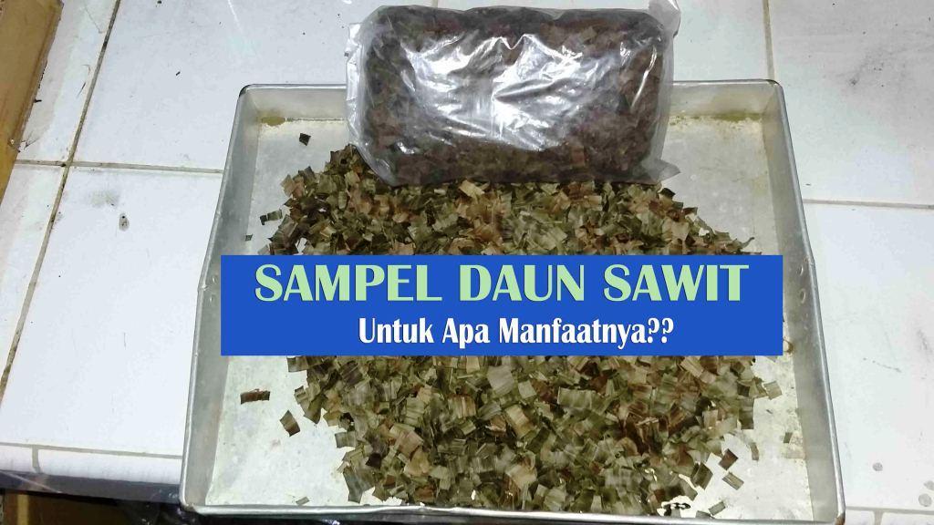 Pengambilan Sampel Daun Sawit