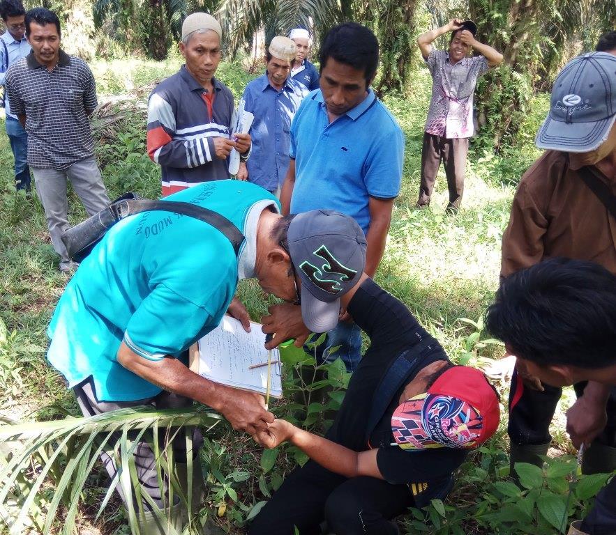 pengukuran pertumbuhan vegetatif sawit