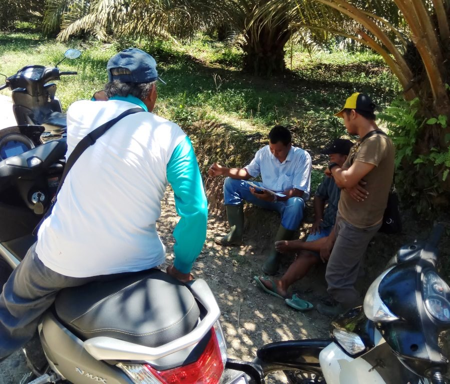 Survey Lahan Perkebunan Sawit