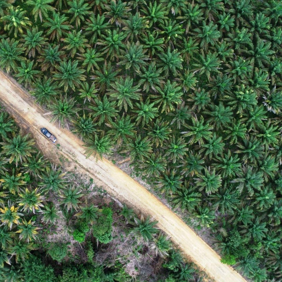 contoh foto udara kebun